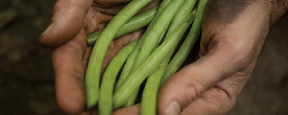 Birds Eye veggies are not processed. They are grown with care by real farmers.